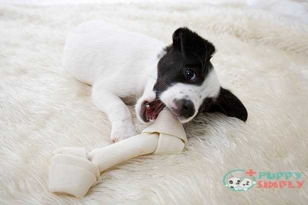 Little Pup With Bone best rawhides for dogs