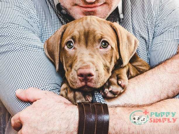 man hugging a young charming puppy