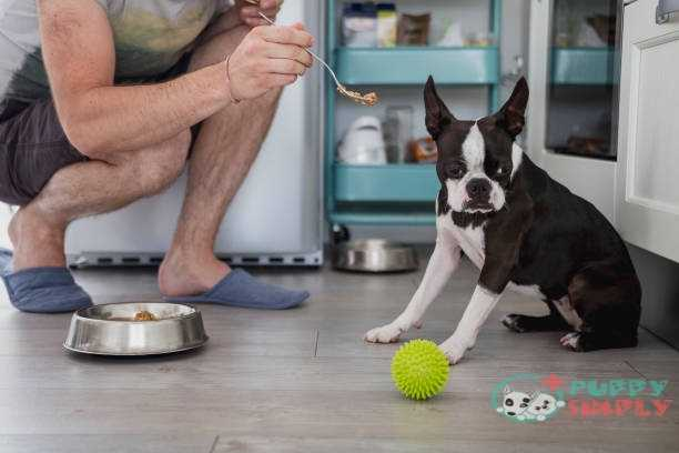 best dog food for picky eaters