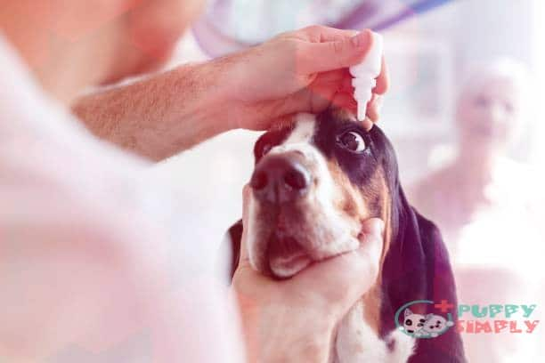 best eye drops for dogs with allergies