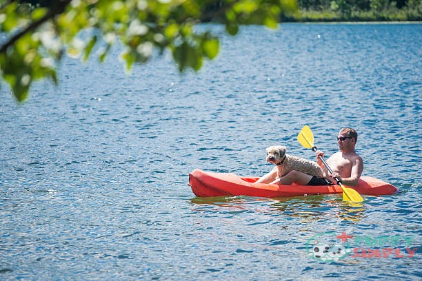 best kayaks for dogs