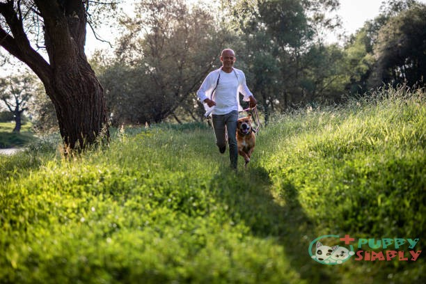 best outdoor dogs that can live outside