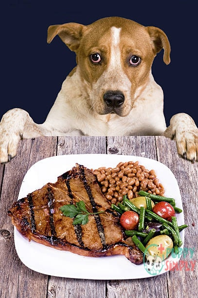 can dogs eat beans
