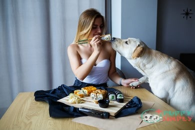 can dogs eat wasabi