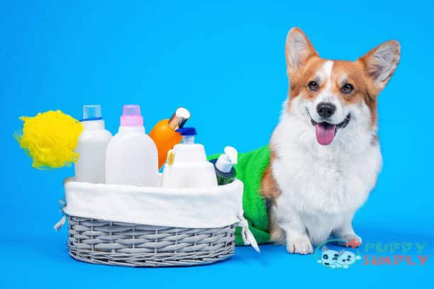 Best Dog Lotion for Dry Skin (Top 10 Brands of 2021)