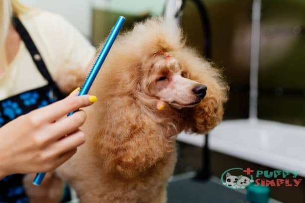 Best Brush for Poodles: Top 9 & Buying Guide of 2021