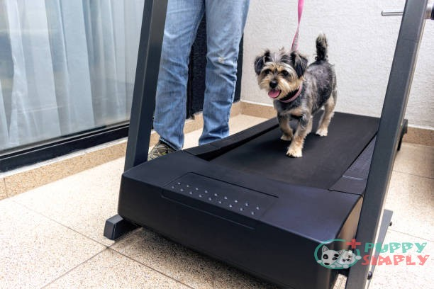 5 Best Dog Treadmills (2021 Review & Buying Guide)