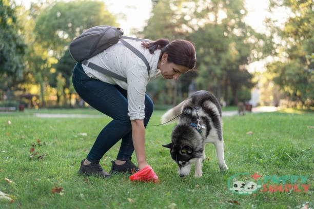 Causes of White Specks In Dog Poop